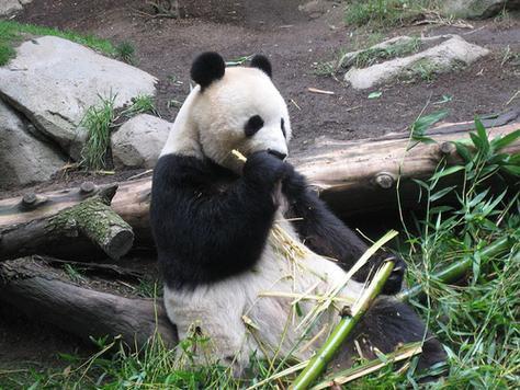 Balboa Park Zoo