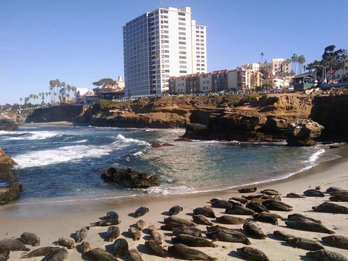 Seals of La Jolla Beach
